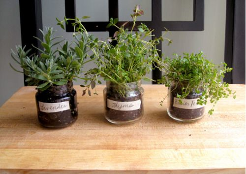 Small Baby Food Jar Herb Garden