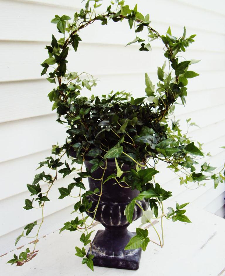 tip-make-a-topiary-from-a-wire-coat-hanger-image-1.JPG