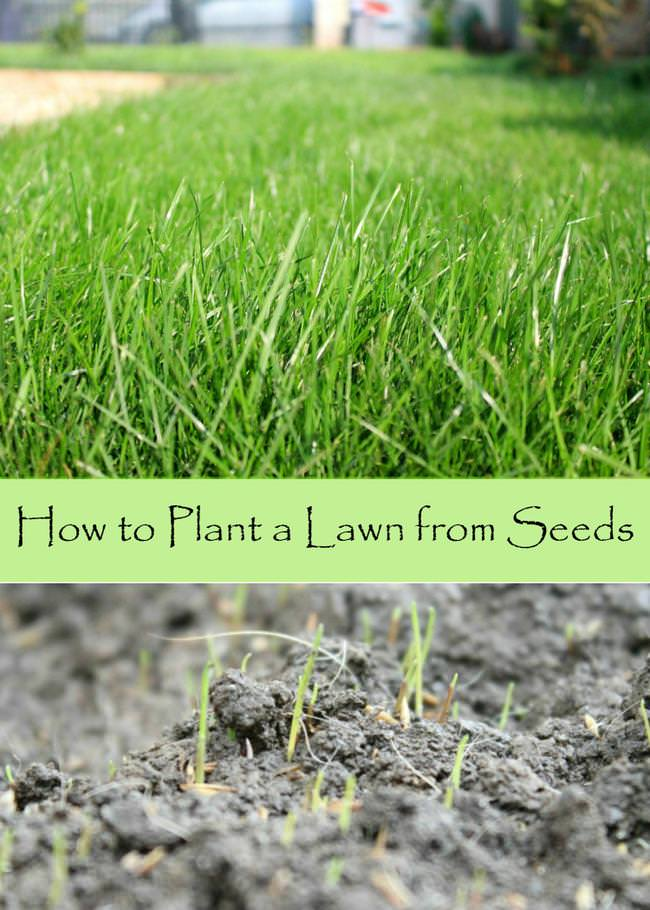 How to plant a lawn from seeds-jpg