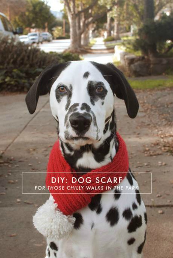 DIY Warm Dog Scarf