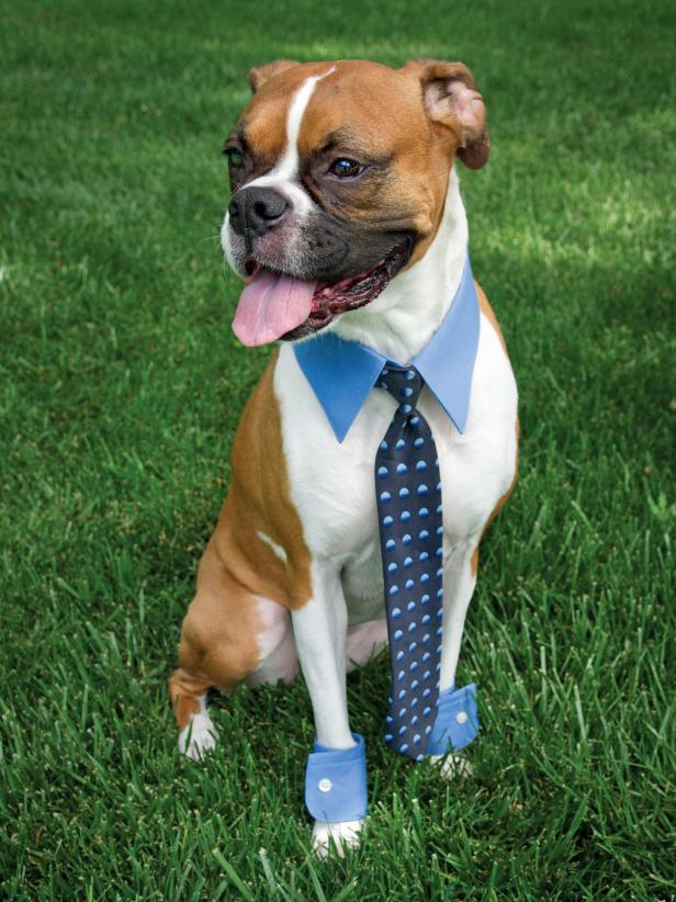 business costume dog