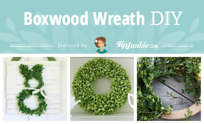 Boxwood Wreath DIY
