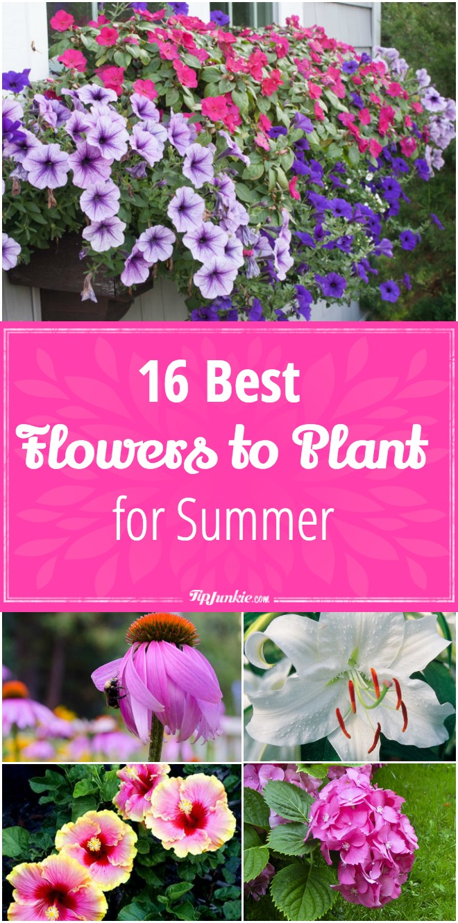 16 Best Flowers to Plant for Summer