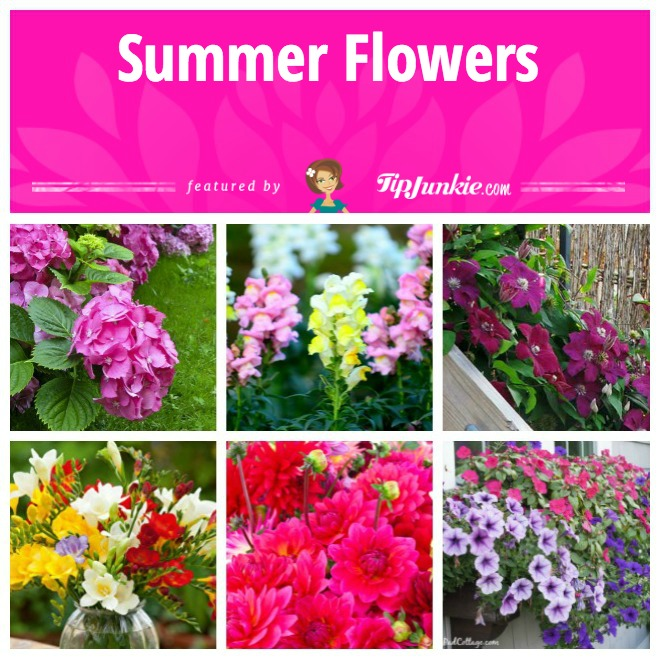 Summer Flowers Save In