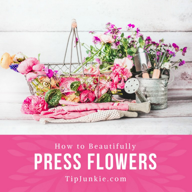 How To Press Flowers Beautifully on TipJunkie