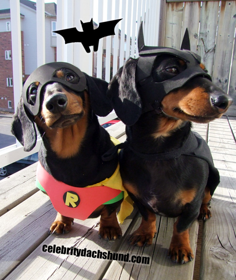 BATDOG & ROBIN Dog Costumes