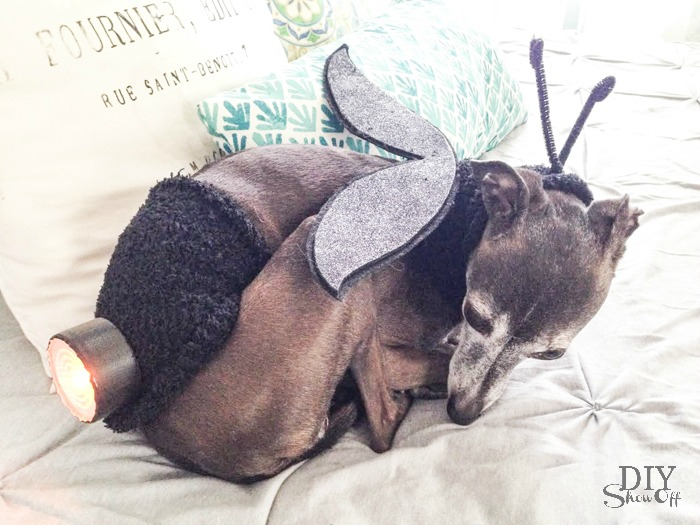 DIY Lightning Bug Dog Costume