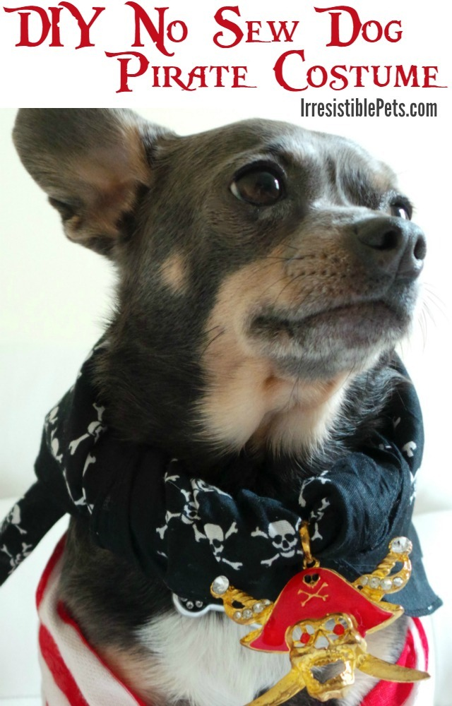 DIY-No-Sew-Dog-Pirate-Costume-Tutorial-on-IrresistiblePets.com_thumb