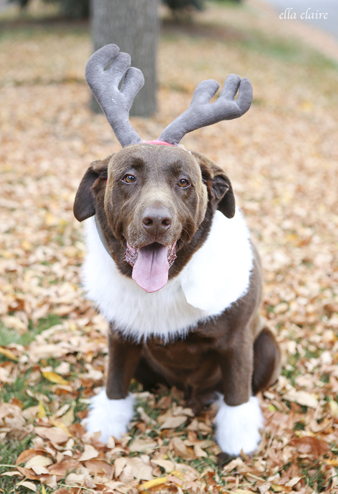 Disney Sven Frozen Costume for a Dog