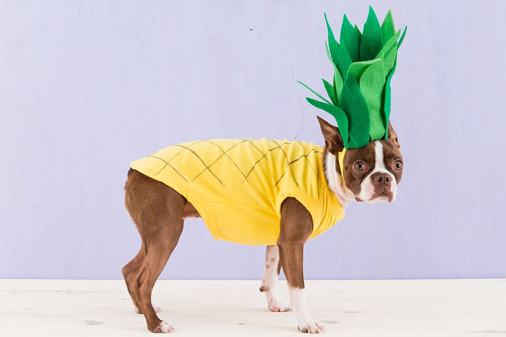 Pineapple DIY Halloween Dog Costumes