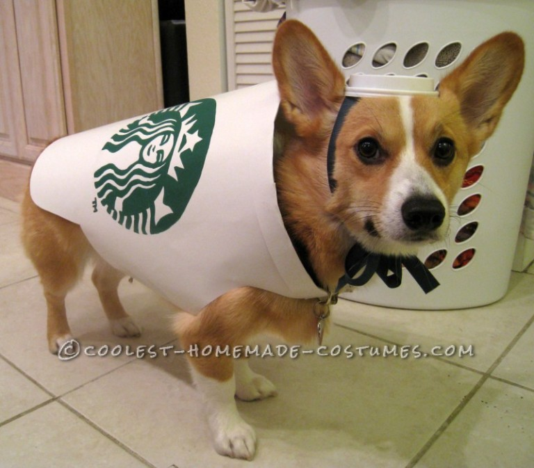 starbucks dog costume easy and inexpensive