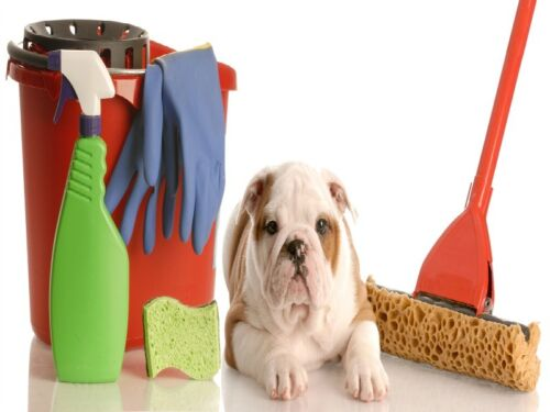 puppy and cleaning supplies