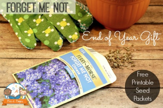 Forget Me Not Seeds